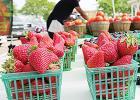 Downtown Mesquite Farmers Market Debuts June 12