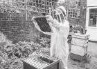Saving Bees One Hive at a Time: The Basics of Backyard Beehives