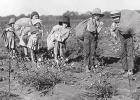 "My ""cotton-picking business"" around 1959-1960….."