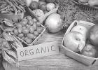 The Benefits of Organic Agriculture